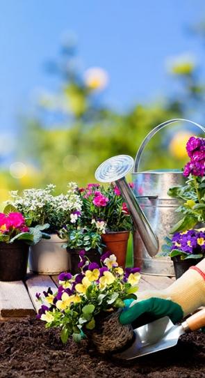 засаждане на цветя в градина