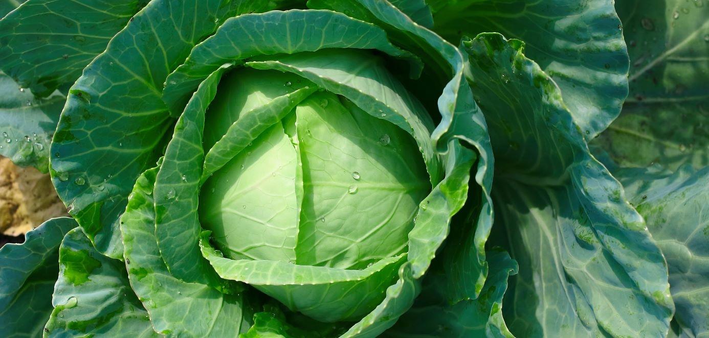kod zeleno tunkostite w uspeshnoto proizvodstvo na zele