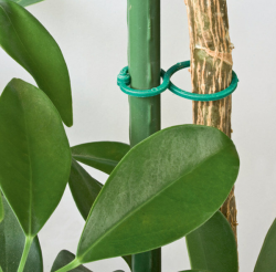 Скоби за растения